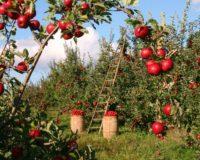 Αυξάνονται οι εξαγωγές ακτινιδίων, εσπεριδοειδών και μήλων