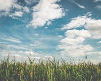 Επανέρχεται επιτακτικά ως ζητούµενο ηανασυγκρότηση των αγροτικών εκµεταλλεύσεων