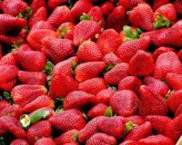 Προβλήματα στην παραγωγή δημιουργεί ο παγετός ωστόσο καλές οι ροές των εξαγωγών φράουλας