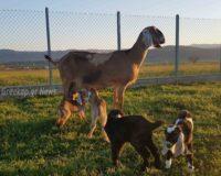 ΣΕΚ:  Απαραίτητη η ειδική, γενναία ρύθμιση των χρεών των κτηνοτρόφων- πτηνοτρόφων