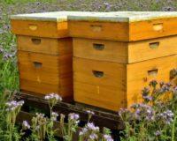 Οικονομική ενίσχυση των μελισσοπαραγωγών της Κρήτης ζητάει ο Μ. Χνάρης
