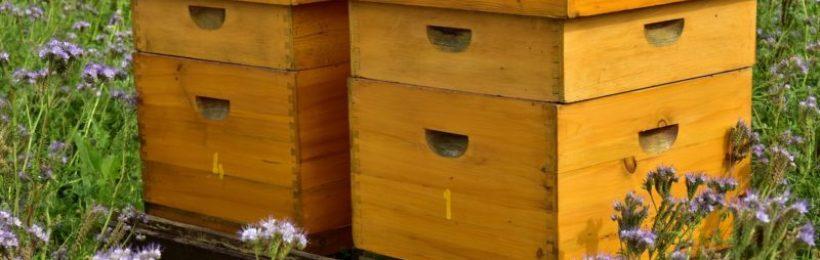 Μέτρα προστασίας μελισσών και τοποθέτησης των κυψελών από τα γεωργικά φάρμακα