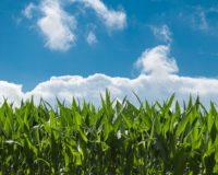 Σχέδιο δράσης της ΕΕ με νέα νομοθεσία για τις οργανικές ουσίες και τα βιολογικά προϊόντα από το 2021