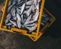 Το ευρωκοινοβούλιο ενέκρινε την αύξηση κονδυλίων για την αλιεία