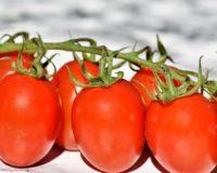 Τριφυλία: Πλήγμα για τους παραγωγούς η καστανή ρυτίδωση της ντομάτας