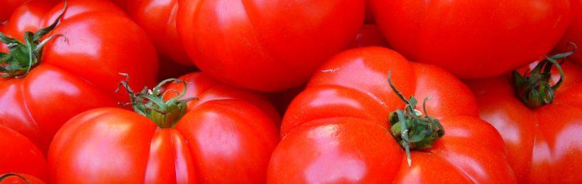 Για αύξηση καλλιεργούμενων εκτάσεων συνηγορούν τα πρώτα στοιχεία στη βιομηχανική ντομάτα το 2021