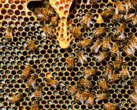 Μ. Βορίδης: Στηρίζει με 1,8 εκατ. ευρώ τη μελισσοκομίαστα μικρά νησιά του Αιγαίου Πελάγους
