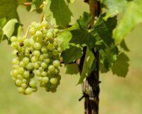 ΚΕΟΣΟΕ: Δυναμική πορεία εξαγωγών για οίνους ΠΓΕ – αυξημένες ποσότητες ΠΟΠ