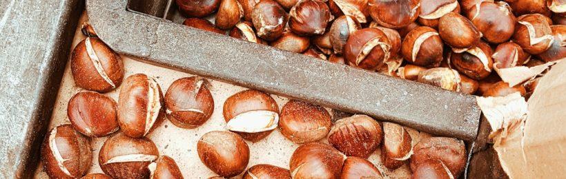 Αποζημιώνονται οι ζημιές στα κάστανα σε Πήλιο και Αγιά με τις διαδικασίες του ΕΛΓΑ