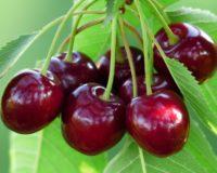 Καθυστερεί τις εξαγωγές των θερινών η οψίμηση της παραγωγής εαρινών φρούτων