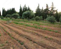 Πρέσπες: Καταστράφηκαν πάνω από 10.000 στρέμματα φασολιών εξαιτίας της κακοκαιρίας