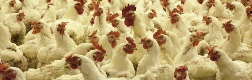Αναπτυξιακός νόμος: Προβλέπονται ρυθμίσεις για επεκτάσεις στάβλων και ίδρυση πτηνοτροφείων
