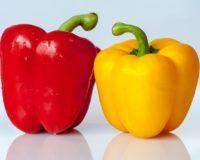 Ostrinia nubilalis: Ένας ύπουλος εχθρός της πιπεριάς