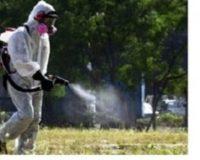 Τον κώδωνα κινδύνου κρούουν οι αγροτικοί σύλλογοι Χανίων για την δακοκτονία