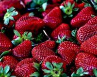 Ηλεία: Σε απόγνωση οι φραουλοπαραγωγοί