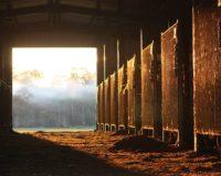 ΥΠΑΑΤ: Απλοποίηση των διαδικασιών για τη νομιμοποίηση των σταβλικών εγκαταστάσεων