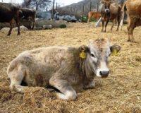 Συζήτηση του Κτηνοτροφικού Συλλόγου Αττικής με θέμα τις «Καινοτομίες στην Διατροφή των Μηρυκαστικών»
