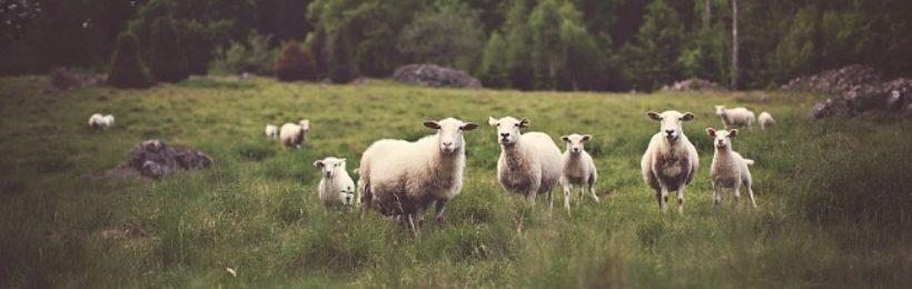 Τυροκομικές μονάδες άρχισαν να χρηματοδοτούν κτηνοτρόφους για αγορά ζωικού κεφαλαίου