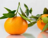 Φυτοπροστασία φθινοπωρινή – χειμωνιάτικη στα Εσπεριοδοειδή