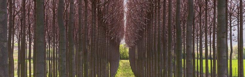 Το Ευρωκοινοβούλιο ζητά πρόταση ώστε τα Ευρωπαϊκά προϊόντα να μην συνεισφέρουν στην καταστροφή των δασών