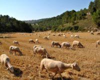 Υπηρεσία μιας στάσης για την λήψη άδειας εγκατάστασης στάβλου και μάλιστα εντός 50 ημερών θα αποτελεί για τον κτηνοτρόφο