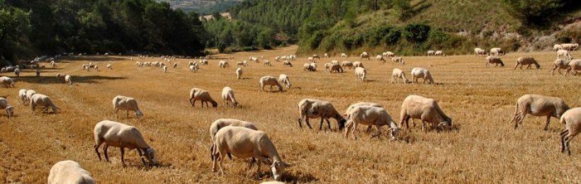Η Κομισιόν ενέκρινε συμπεράσματα για ένα ευρωπαϊκό σήμα καλής μεταχείρισης των ζώων