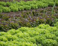 Δόθηκε έγκριση για την δημιουργία λαχανόκηπων μέσα στους αυλόγυρους των σχολείων