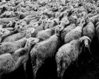 Ξεκίνησε η υλοποίηση του προγράμματος περισυλλογής και διαχείρισης ή και αποτέφρωσης κάθε είδους νεκρών ζώων